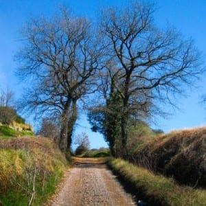 Voleu Descobrir L'entorn Natural I Cultural De Taradell? Us Proposem Tres Rutes Autoguiades